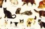 Papel Cartonagem - Gatos
