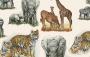 Papel Cartonagem - Animais Selvagens